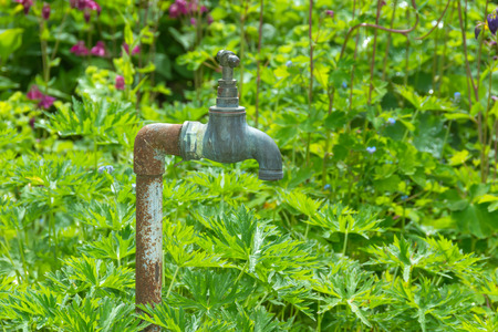 Old weathered garden tap or faucet with green palnts as background. Stock Photo