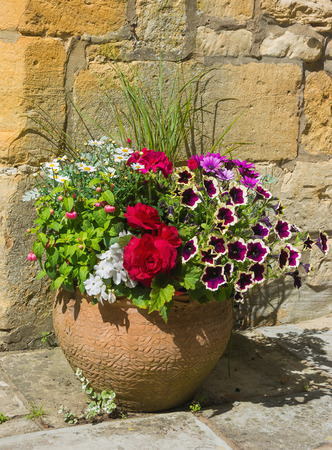 Colorful plants in a terracota pot, including begonia, petunia, fuchsia, impatiens Stock Photo