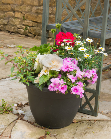 impatiens: Colorful plants in a  pot, including begonia, petunia, fuchsia, impatiens