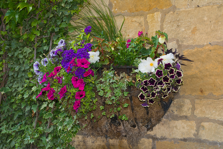 Colorful plants in wall mounted wrought iron basket  including begonia, petunia, ivy. Stock Photo