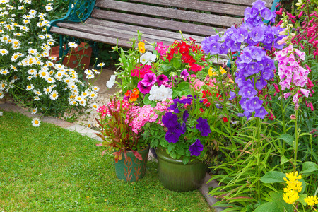 cottage garden: Cottage garden with wooden bench and flowers in containers.