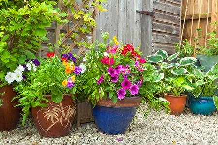 flower pot: Garden shed surrounded by colorful potted plants and shrubs.