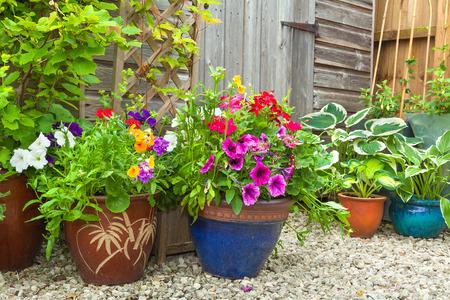 flor violeta: Vertiente del jard�n rodeado de plantas y arbustos en macetas de colores.