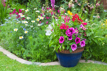 Mixed colorful flowers in a  plant border