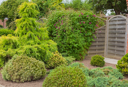 drought    resistant plant: Evergreen shrubs creating a dry area of a garden.