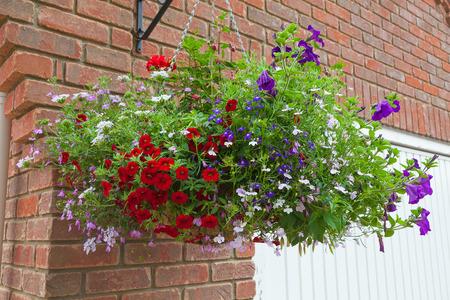 Colorful hanging basket of summer flowers.