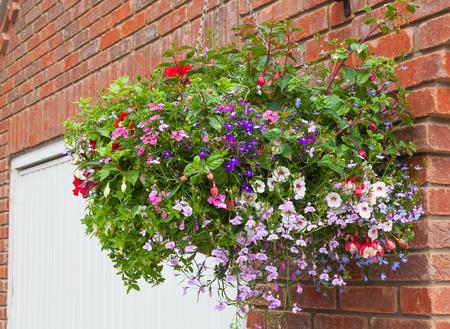 hanging basket: Colorful hanging basket of summer flowers.