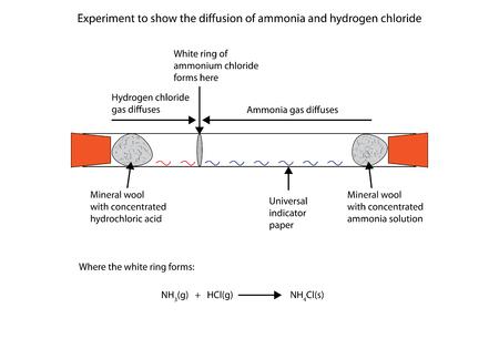 amoniaco: Etiquetado diagrama que muestra la difusión de amonio y cloruro de hidrógeno Vectores