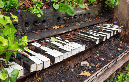 Piano left to rot and become overgrown with plants Stock Photo