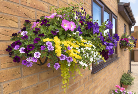 Mature summer hanging basket of flowers attached to a brick wall. Banco de Imagens - 81100924