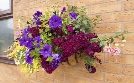 Mature summer hanging basket of flowers attached to a brick wall. Banco de Imagens - 81212492