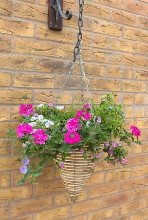 Cone shaped wicker hanging basket with beautiful pink petunia plants. Banco de Imagens - 81115637