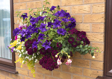 Mature summer hanging basket of flowers attached to a brick wall.