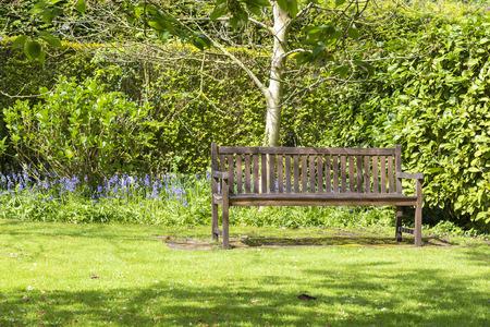Lone garden bench set in a tranquil corner of a garden.