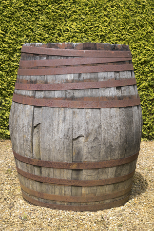 Old wooden barrel standing in front of green tall bushes.