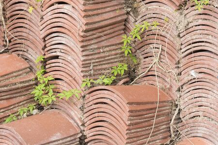 Terracotta roof tiles stacked ready for use with a symmetrical pattern.With foliage growing through.