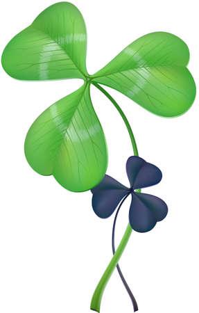 Three-leaf clover  lat  Trifolium, two different species