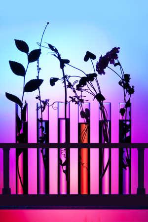 試験管の花そして植物