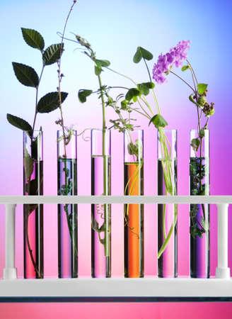 specimen testing: Flores y plantas en tubos de ensayo