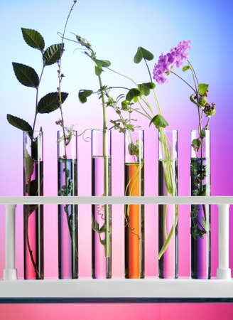 Flowers and plants in test tubes Stok Fotoğraf - 8909036