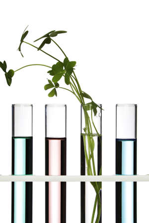 science scientific: Flowers and plants in test tubes