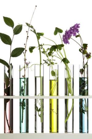 Bloemen en planten in proefbuizen  Stockfoto