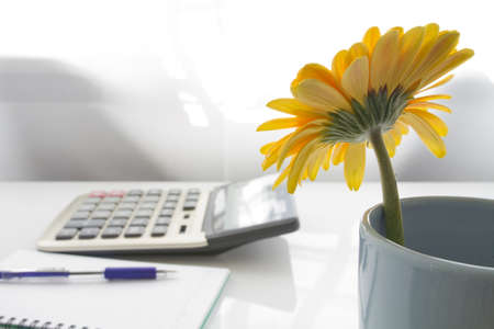 Yellow flower on business desk photo