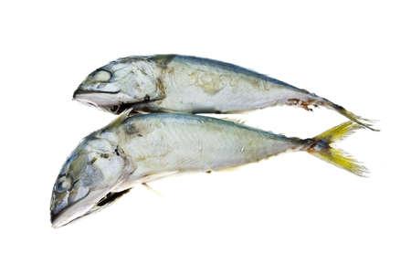 Fresh mackerel fish isolated on white background photo