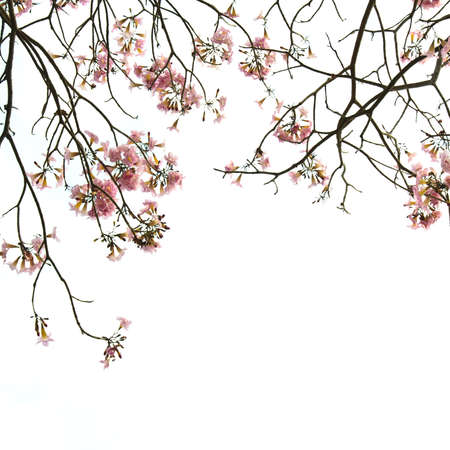 Branch of tropical white flower isolated Stock Photo - 9831757