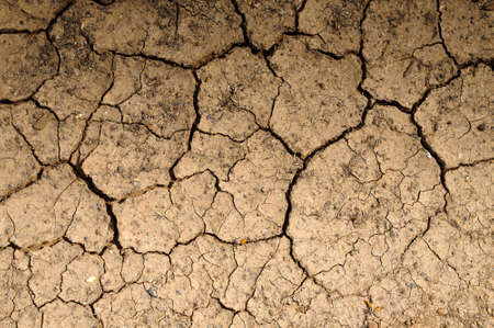 Dry soil textured background photo