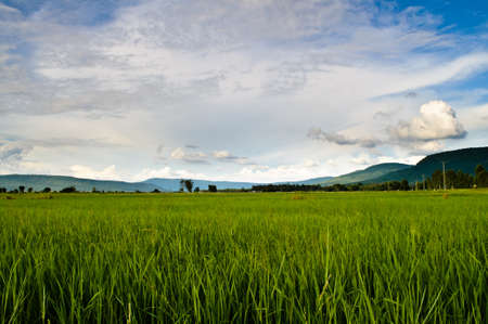 Rice field in countryside of Thailand photo