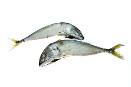 Mackerel fish photo