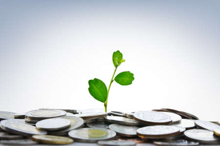 Green plant growing from coins