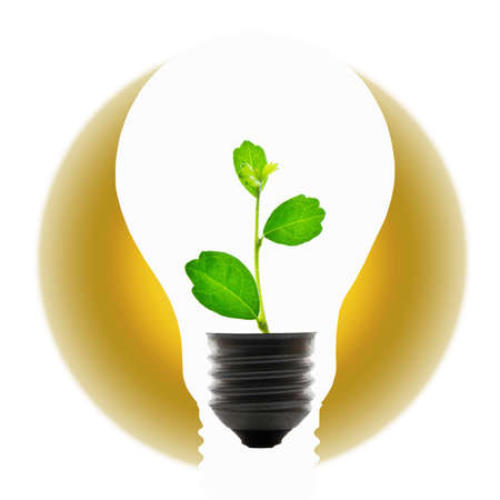 Plant in light bulb for global warming concept photo