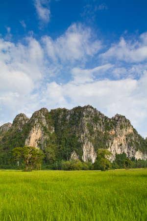 Paddy and limestone mountain at Phitsanulok, Thailand (Noen Ma Prang district) photo