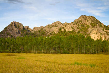 Limestone mountain and paddy in harvest season at Phitsanulok, Thailand (Noen Ma Prang district) Stock Photo - 11487492