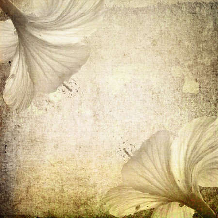 Grunge background with hibiscus flower photo