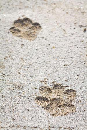 huellas de perro: Huellas permanentes de perro en piso de concreto Foto de archivo