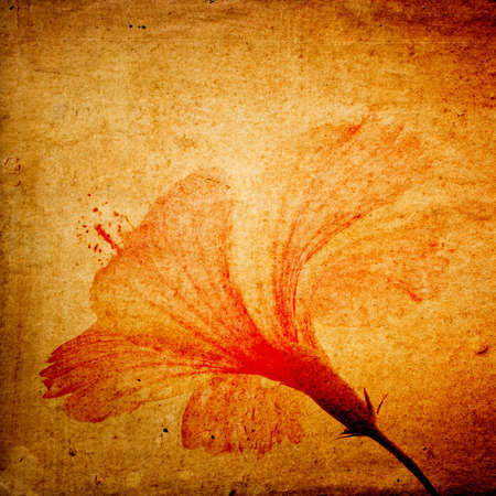 Hibiscus flower background, retro style photo