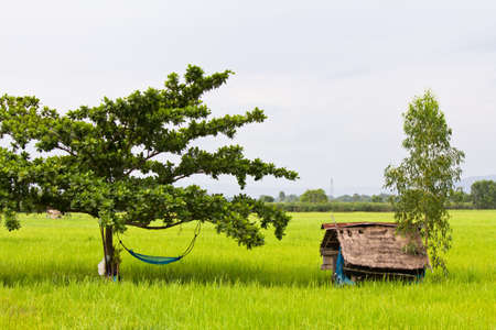 sufficiency: Farmer s hut and hammock in paddy