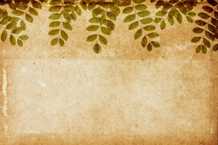 Lovely leaves on aged paper Stock Photo - 15034487