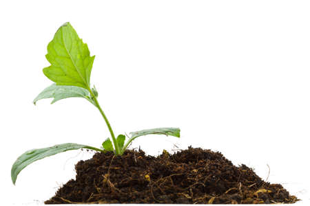 Young plant and pile of soil on white background photo