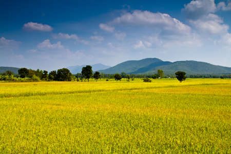Rice field and mountain in Uttaradit province, Thailand Stock Photo - 16260034