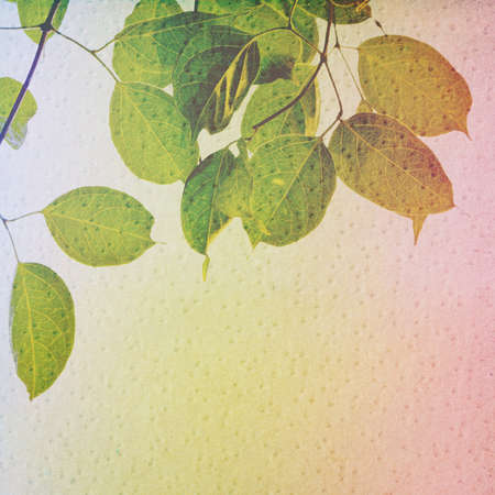 knobby: Grunge leaves background on knobby texture