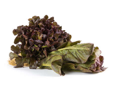 cos: Hydroponic vegetable, red oak and red cos lettuce on white background
