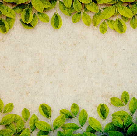 mulberry paper: Mulberry paper with creepers, environment concept background Stock Photo