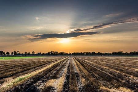 Verbrande rijst veld met zonsondergang hemel in Thailand