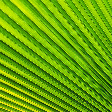 Closeup tropical palm leaf pattern and texture photo
