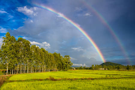 Rainbow over the rice field with row of eucalyptus trees Stock Photo
