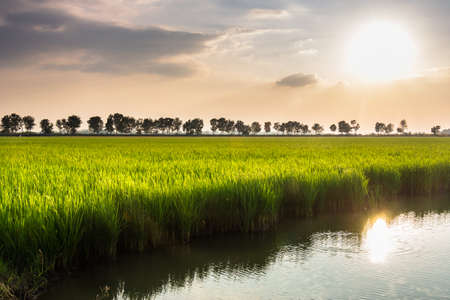 waterside: Waterside rice field with sunshine in countryside of Thailand